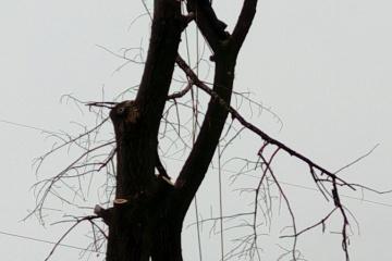 Kategorie dle zaměření - Arboristika a kácení