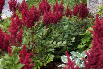 Rodinné zahrady - Havířov - Suchá