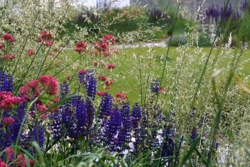 Rodinné zahrady - Ostatní