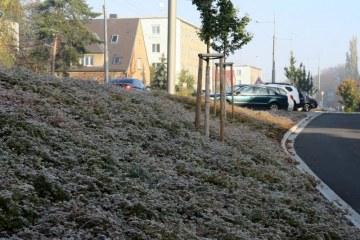Veřejná zeleň - ISOTRA Opava